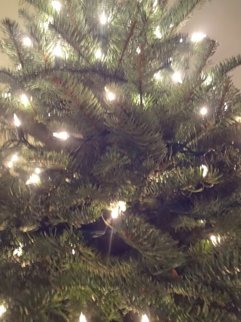 Close up of Christmas tree with white lights