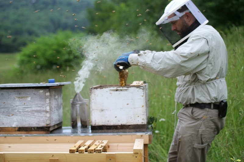 installing a nucleus colony of bees into a top bar beehive