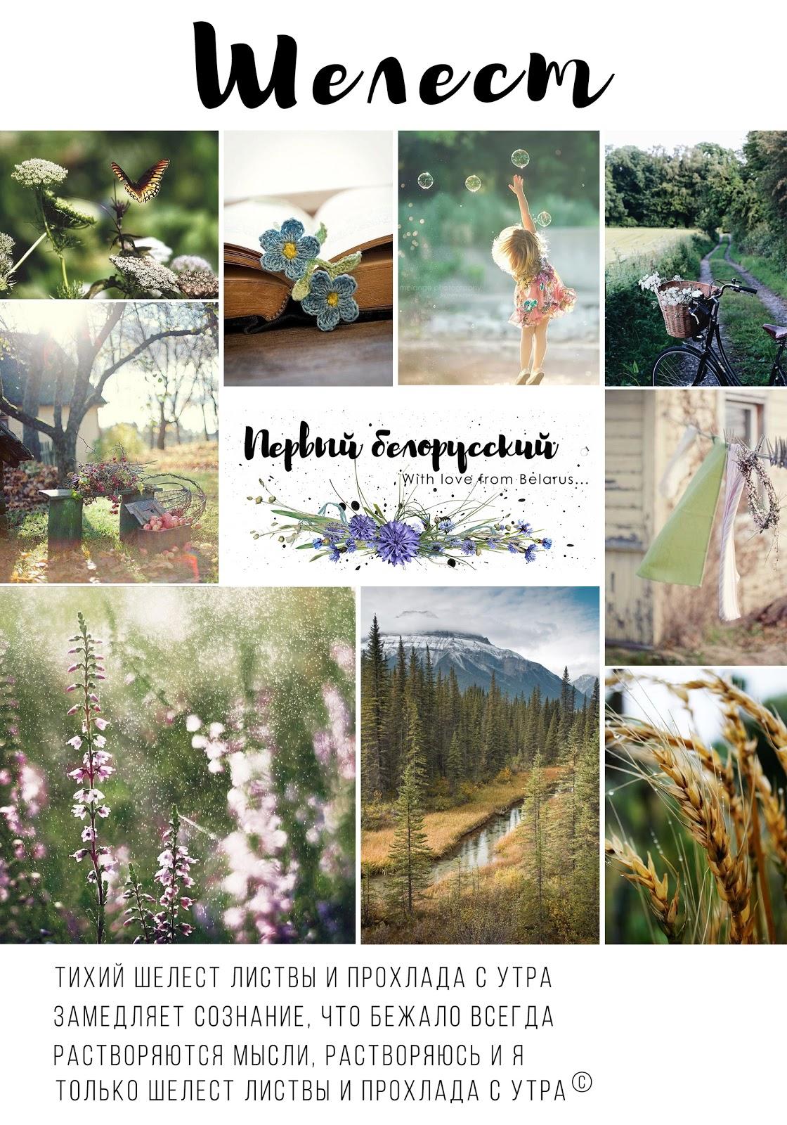 """Задание """"Шелест"""" от Первого Белорусского до 24 августа"""