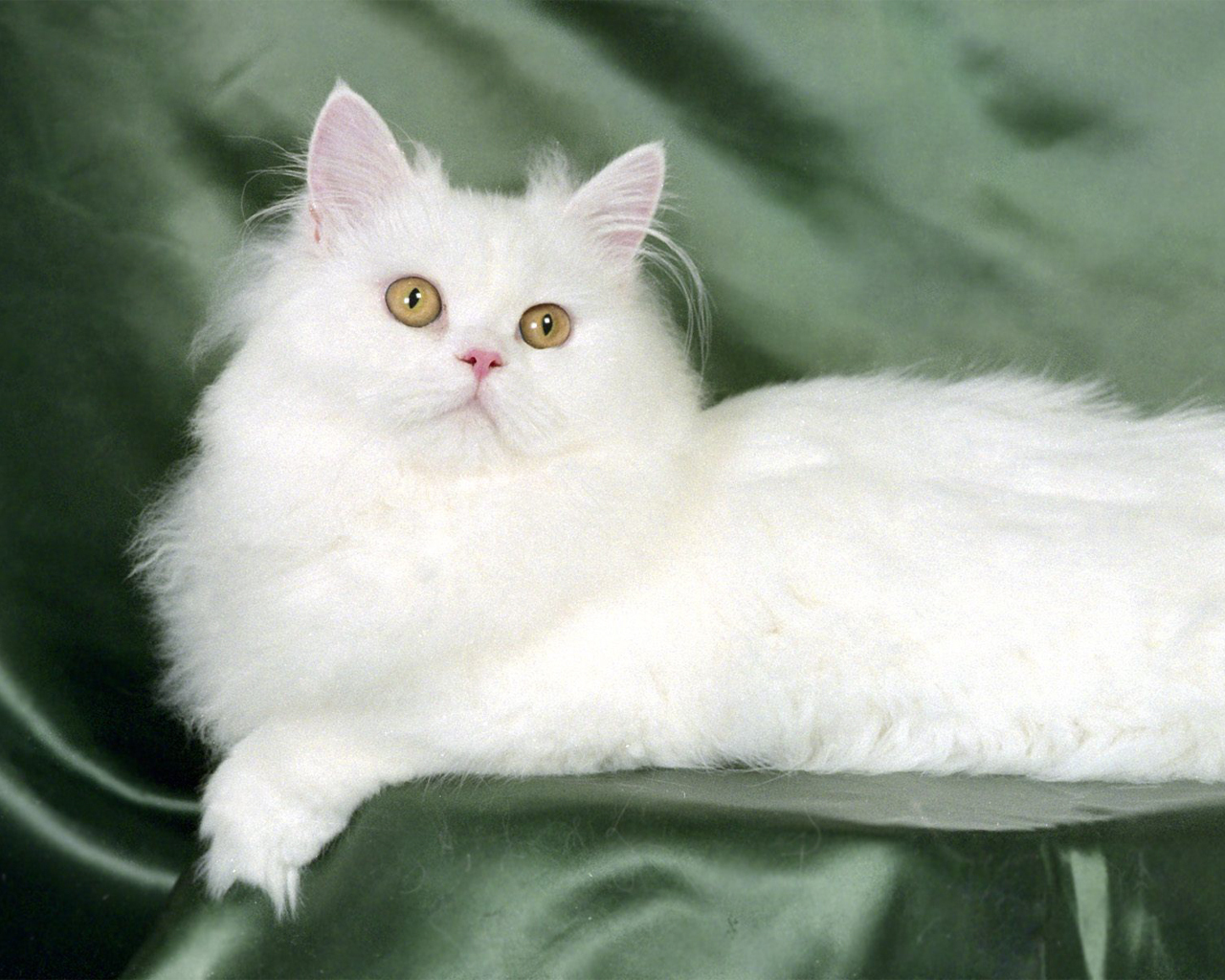 http://3.bp.blogspot.com/-VFgV_yZbAkU/Thq82uIGjBI/AAAAAAAABvQ/Tjo4OUKYlks/s1600/Cats-wallpaper-cats-5194915-1280-1024.jpg