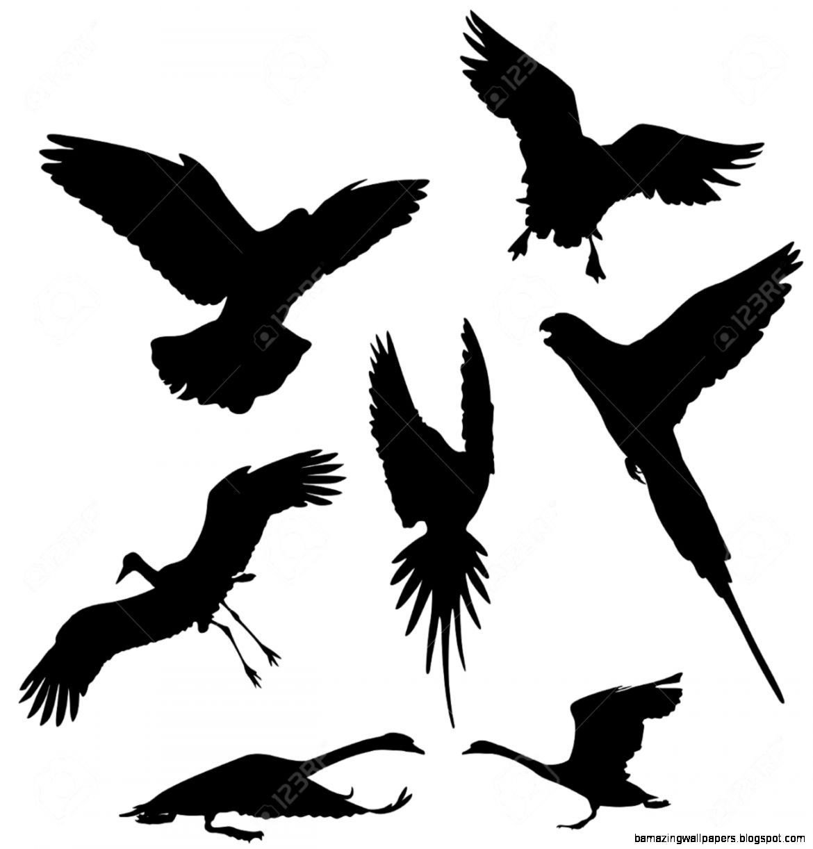 Flying Bird dovegoosestork parrot And Swan Vector Silhouettes