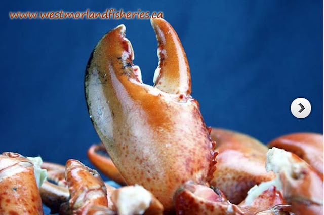Tempting Lobster and Crab Seafood in This Spring