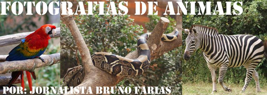 Fotografias de animais