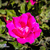 Una flor en el camino