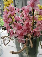 orkideé