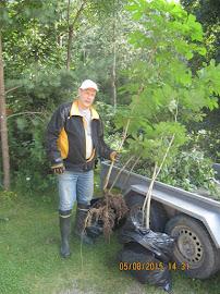 Puutarhuri Tampere välittää istuttaa ja myy hevoskastanjan taimia ymv käteisellä puutarhoihinne