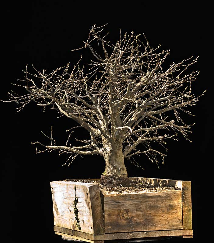 walter pall bonsai articles die naturalistische. Black Bedroom Furniture Sets. Home Design Ideas