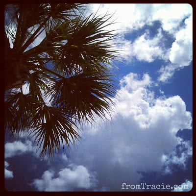 Palm Tree And Puffy Clouds