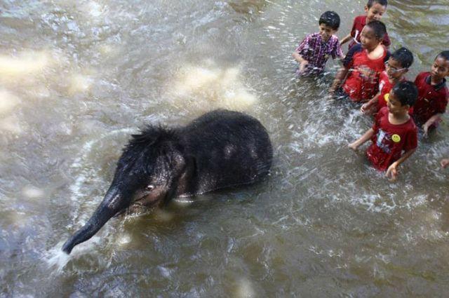 Elefante e crianças na água