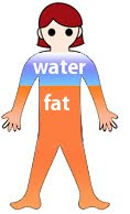 visual representation, body is 80% fat and 20% water and other materials.