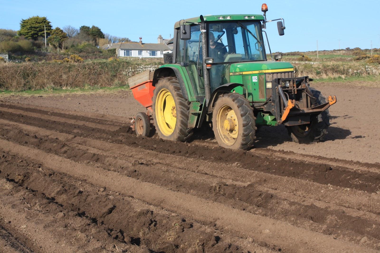 Tractor In Field Planting : Bosavern community farm maincrop field update