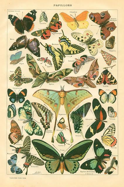 Lámina vintage de mariposas para descargar