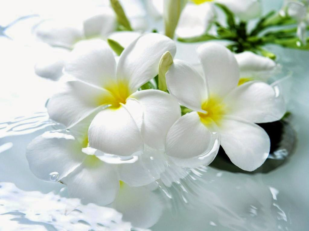 Love Images, White Flowers, part 1