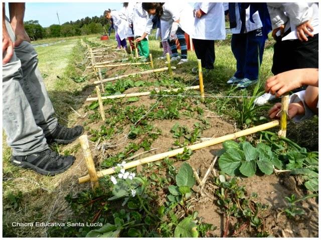Alumnos preparando los canteros - Chacra Educativa Santa Lucía