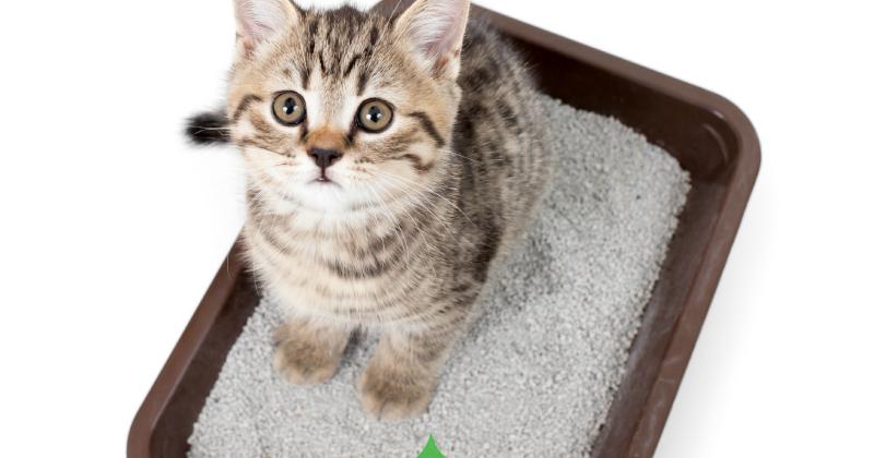 flea treatment for cats australia