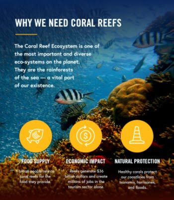 Belang van koraalriffen