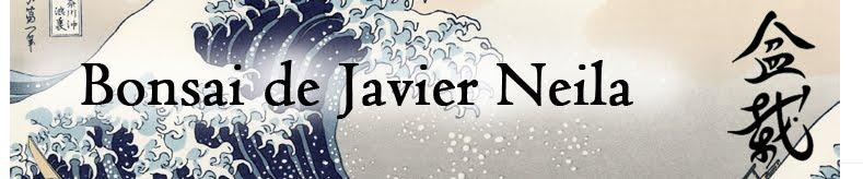 Bonsai de Javier Neila