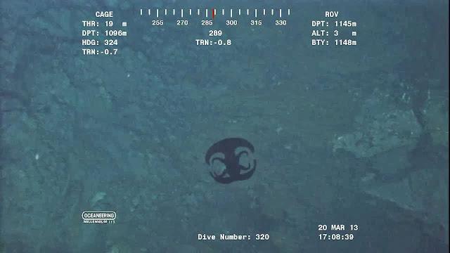Alien Looking Creature Transforming Near Ocean Floor