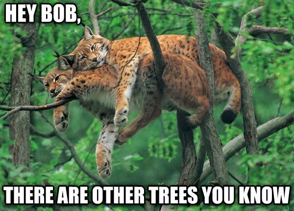 30 Funny animal captions - part 18 (30 pics), funny bobcat pics