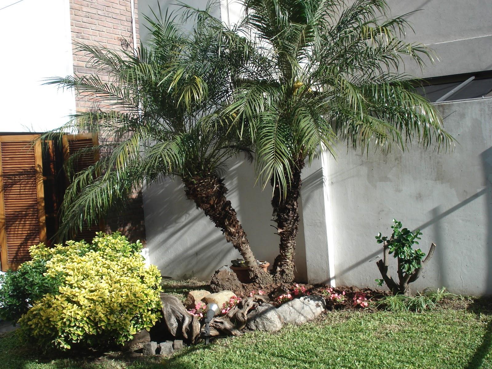 Reverdir jardineria y paisajismo jard n apto para for Palmeras pequenas para jardin