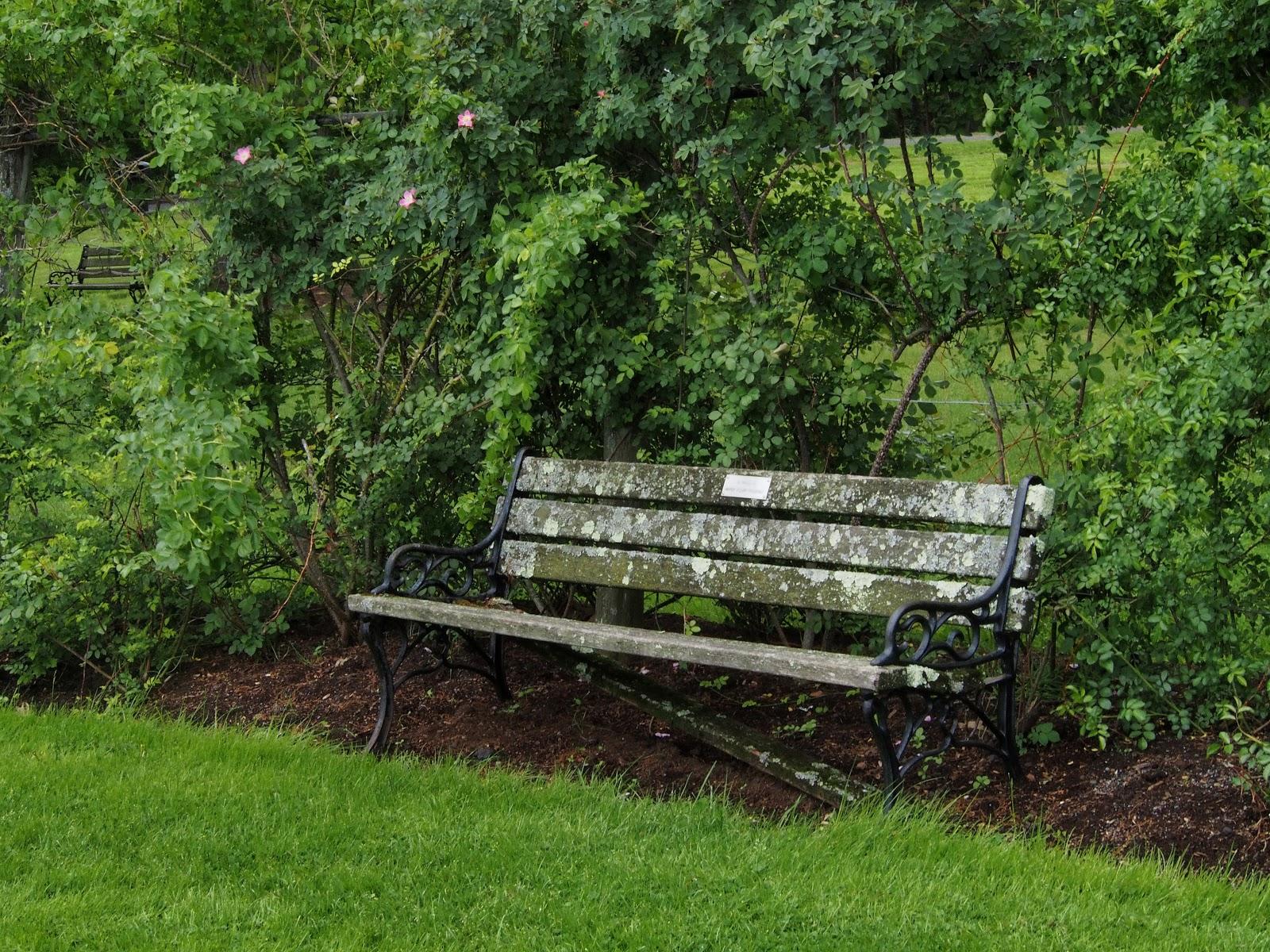 Park Bench, #ElizabethPark #RoseGarden 2014