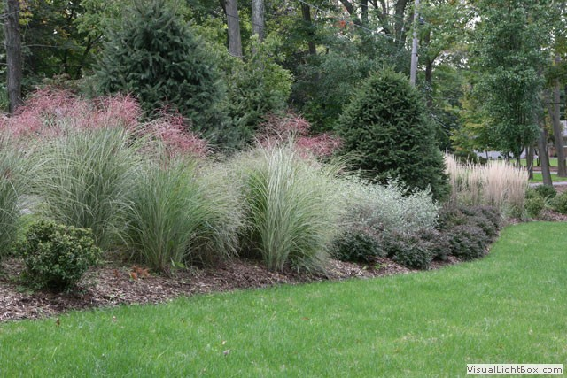 Nanciworld pain in the grass for Ornamental grass border plants