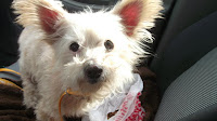 Philippe is a 15 year old senior small breed mix that just needs to be spoiled.