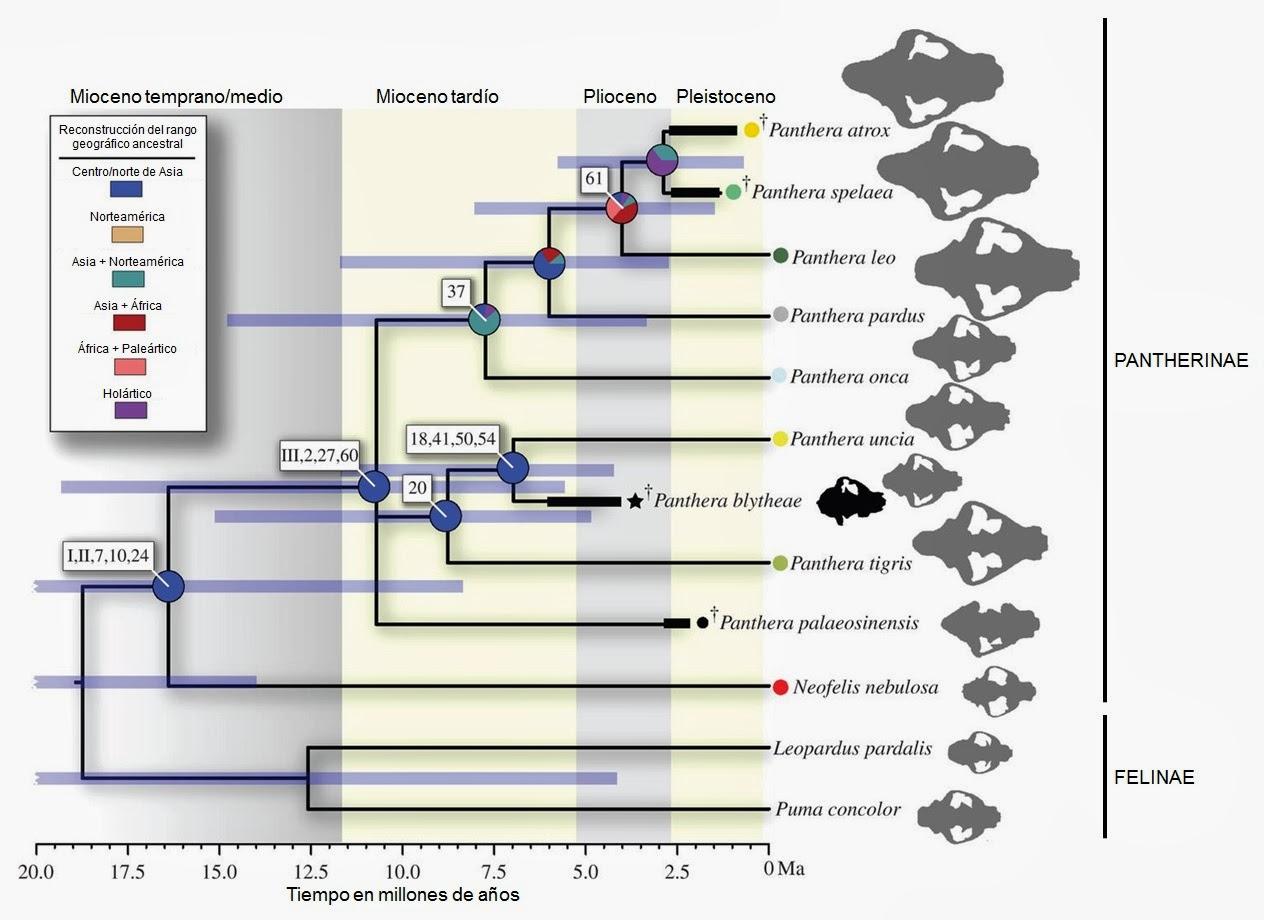 Palaeos, la historia de la Vida en la Tierra: Panthera blytheae y el ...