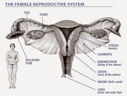 Image Obat herbal terbaik untuk kanker rahim