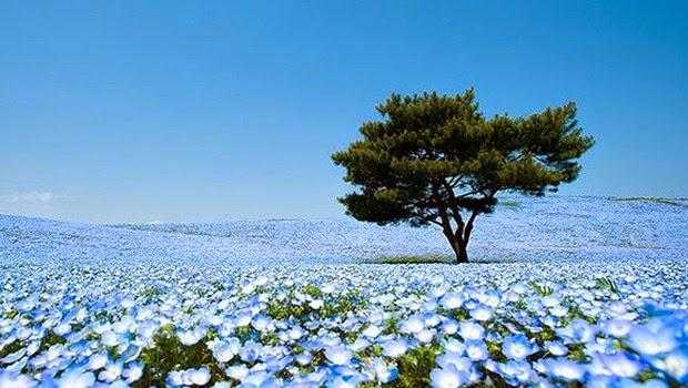 Taman Hitachi Bagaikan Dunia Surga