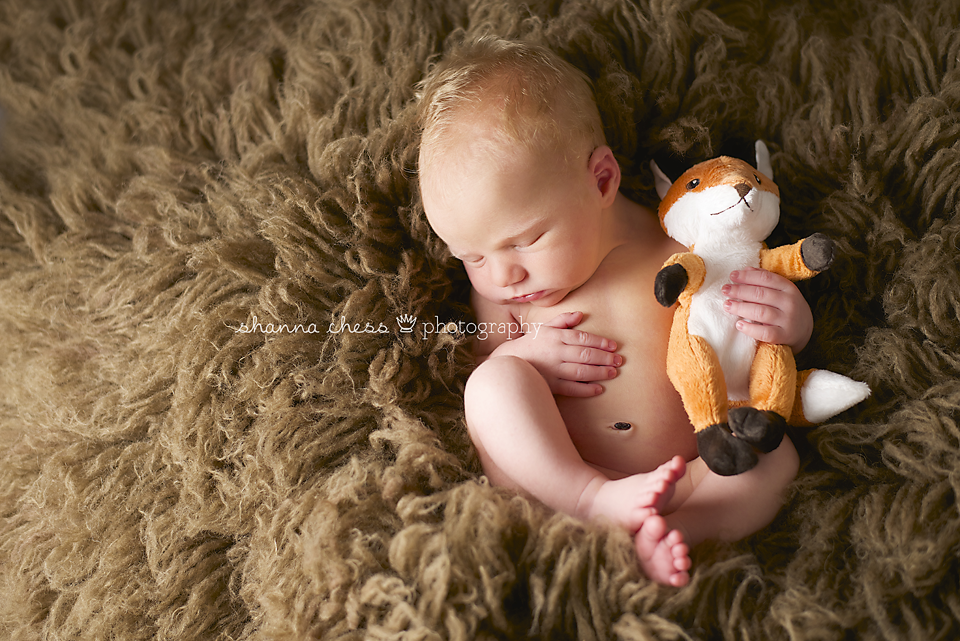 eugene, or newborn photography brown fox