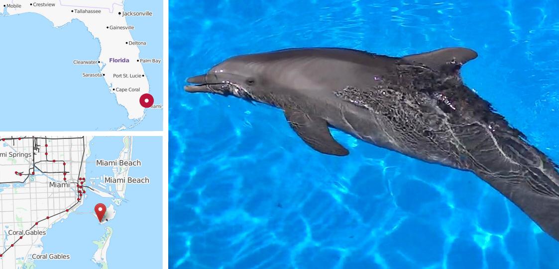 Miami Seaquarium, Delfinshow Miami