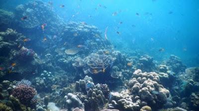 Tempat Wisata Pulau Badalu