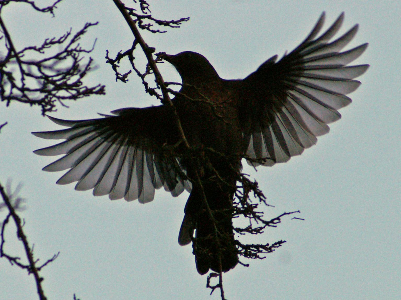 Blackbird Fly Away up But Didn't Fly Away so