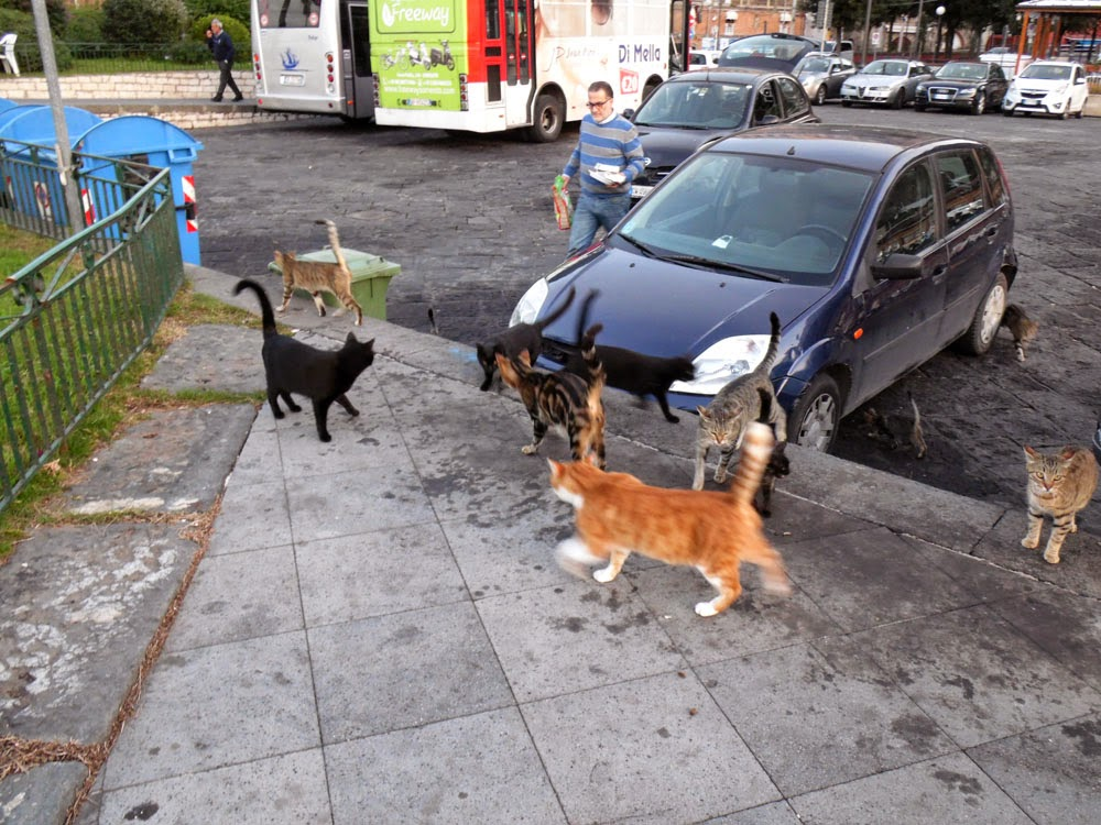 photos of the stray cats of Sorrento by Andie Gilmour
