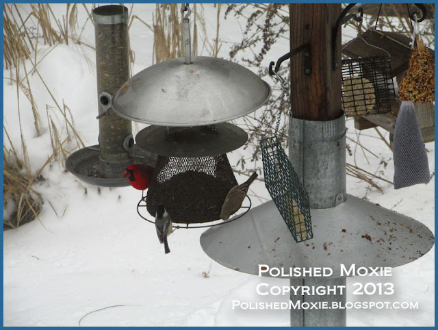 Picture of trio of birds on sunflower seed feeder.