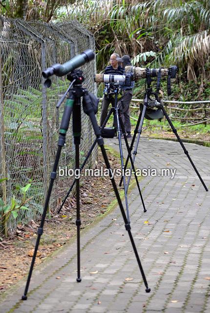 Borneo Bird Festival Pictures