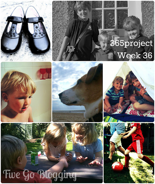 Five Go Blogging 365project week 36