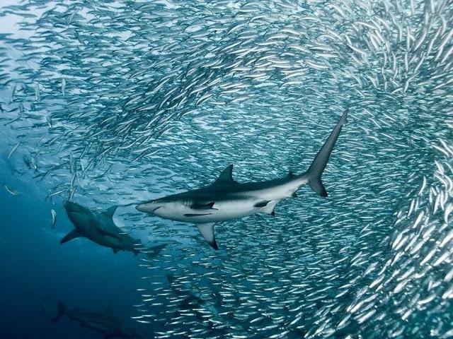 fotografías submarinas de tiburones y delfines
