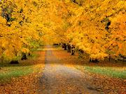 Fotografía de un sendero con arboles de otoño a sus lados. hermoso paisaje de un sendero en otoã±o