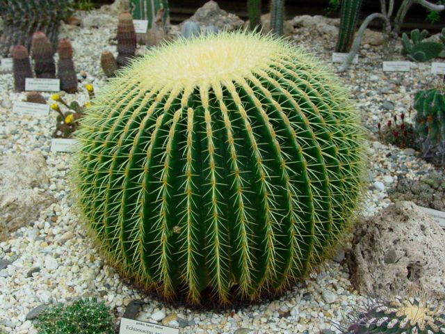 About Plants Is Hoodia Cactus Really Benefit To Weight Loss - African desert names