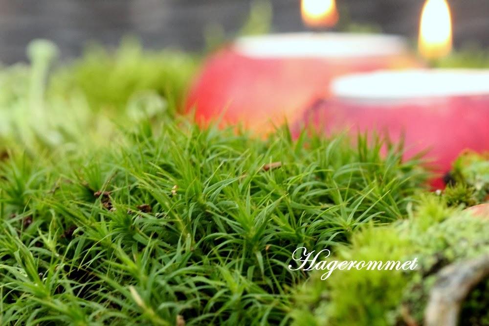 Hagerommet: landskap med mose....