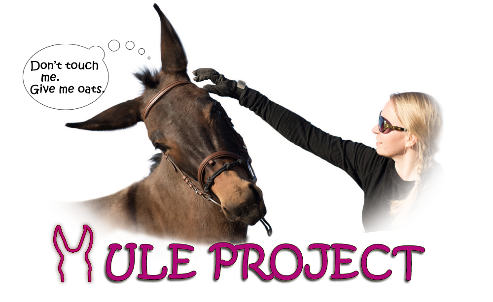 Mule Project