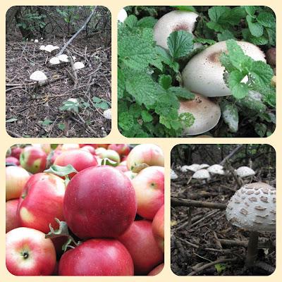 осенний коллаж, персик, яблоки,,грибы