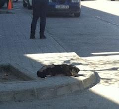 VAGABUNDO.... Dejándose morir en la calle.