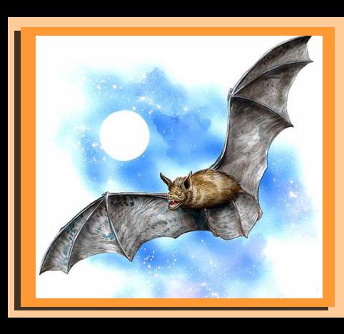 Animales asombrosos: Curiosidades: Otros animales que vuelan sin ...