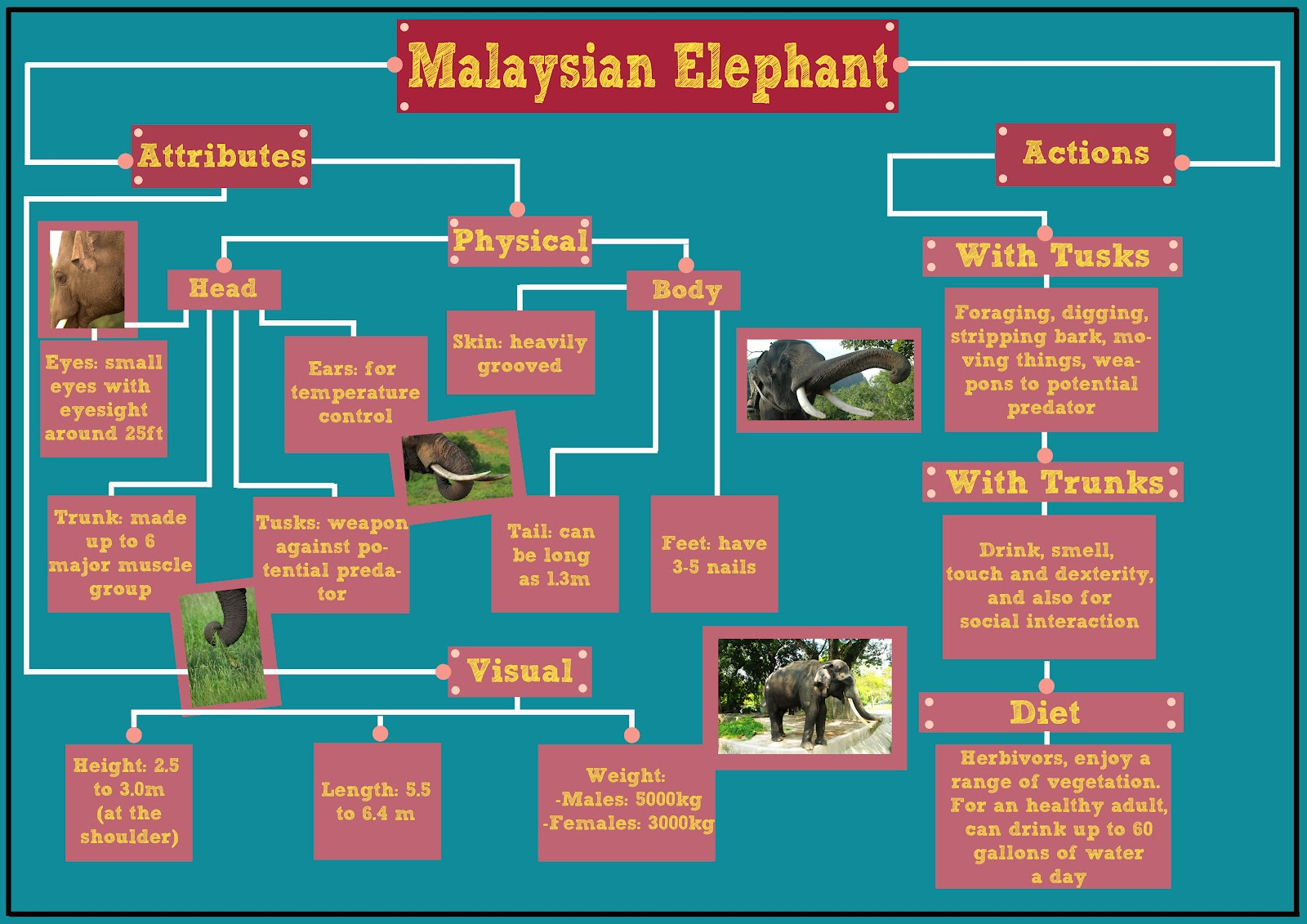 Elephant Skeleton Diagram http://elephasmaximushirsutus.blogspot.com/