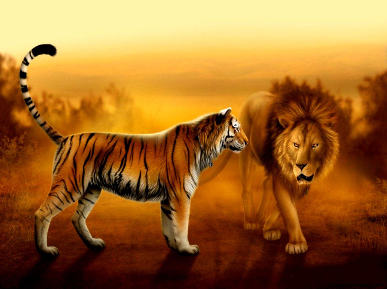 animal wallpaper lion tiger hd wallpapers | wallpapers box