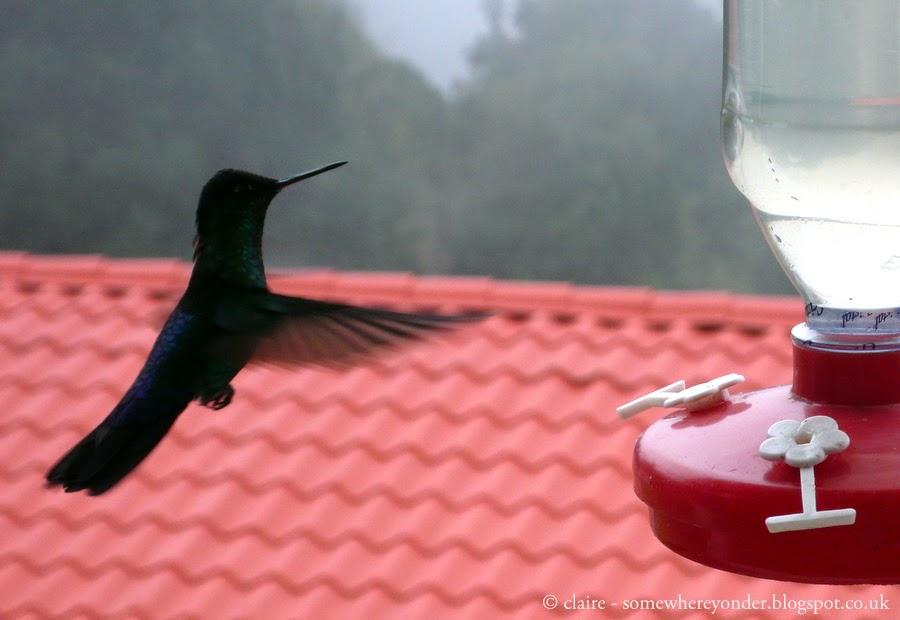 Hummingbird flying to a bird feeder, Mexico