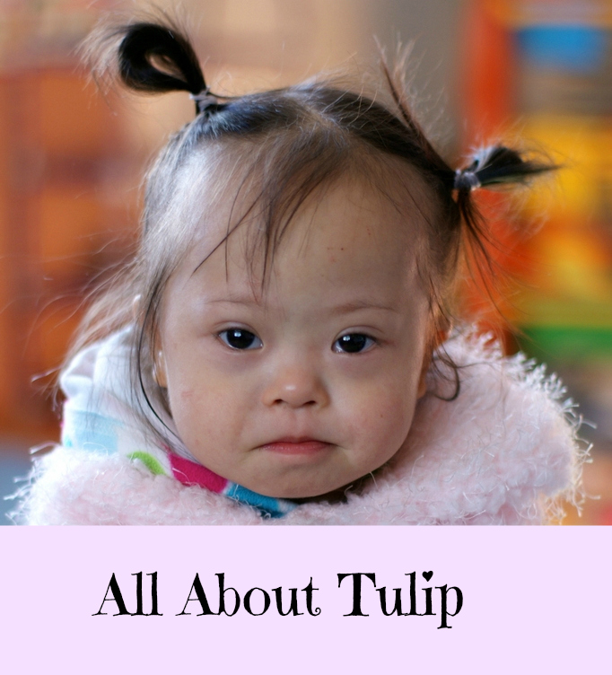 All About Tulip